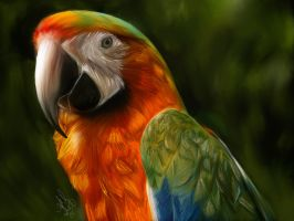 Single Parrot Wall by aibrean
