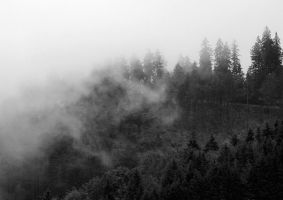 misty trees by cloe-patra