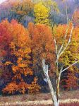 Shades of Autumn 27 by MadGardens