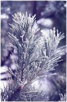 frost... by wildtea