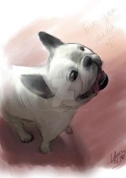 Dayron the frenchie bulldog by Fluffyana