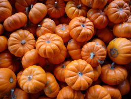 Pumpkins by EverydayStock