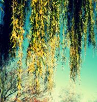 Weeping Willows by Flowerintherain77