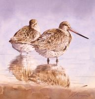 Bar tailed Godwits by RobertMancini