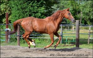 River - Stock 6 by Horses--Stock