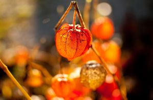 Fireworks of autum 11 by macgl