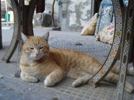 A Cat from Damascus by aidaabozaid