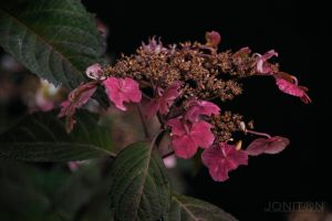 Colors in the Shade by Jonitron