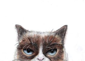 Grumpy cat by Aadavy