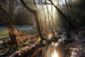 Magic Light above the Creek by FlorentCourty
