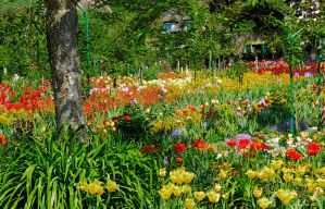 Monet's garden in Giverny as it really is by artamusica