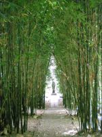 bamboo walk by vbdragonfly