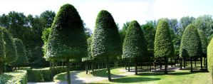 Clipped trees, park in Amsterdam by popicok