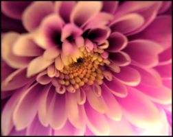 A Flower for Flower.. by Tandikes