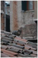 theres a cat on my roof by f1lly