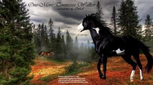 TWH by JuneButterfly-stock