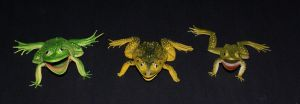 animals - objects- frogs 3 a by Aimelle-Stock