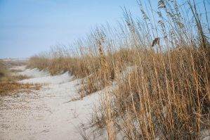 Sea Oats by tanikel