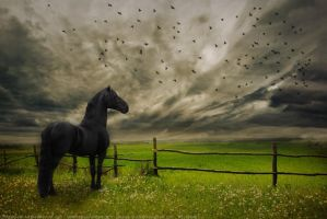 Stormy Day by annad3