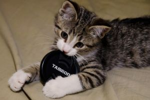 Kitty approves of Tamron by Mutilator-Of-Cookies
