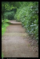 forest path by priesteres-stock