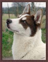 Sirius at Six Months by Volklet