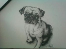 Pug Sketch by miss-manami