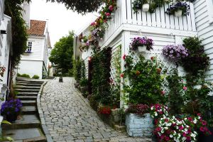 : Stavanger White Flowered : by Lynx-Pardina