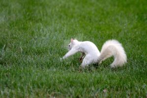 White Squirrel - 092507 - 1 by LarryDNJR