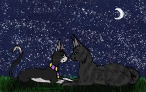 && Look at the Stars, Look How they Shine  by FrostySheeps