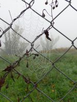 Cobweb on a wire netting by A1Z2E3R