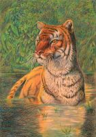Tiger bathes by AldemButcher