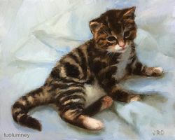 Kitten on a Blanket by tuolumney