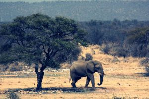 Elephant by Titou963