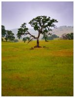 Foothill Tree by themobius