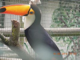 Aves del zoo by Lissit