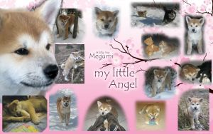 My little Angel! Sad Akita puppy finds a happy end by Samurai-Akita