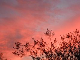 The sky. It's red by Twisted1derland