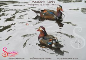 Mandarin Ducks by snazzie-designz