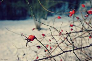 Wintertime by Chococosmos