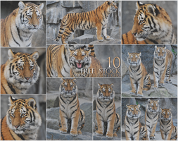 Stock - Young siberian tigers pack by NFB-Fotografien
