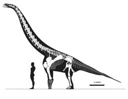 Euhelopus with raised shoulders by palaeozoologist