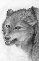 Angry Wolf by Takas15