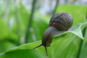 Little snail 14 by Panopticon-Stock