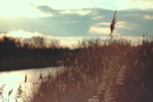 Reeds 2 by dammmmit