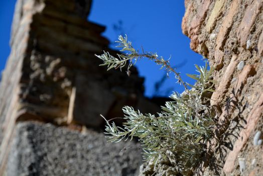 Plant growing in a wall by AsdfirePL