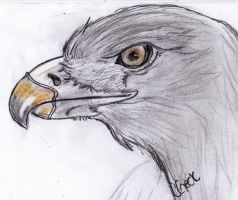 Eagle by BamaBelle2012