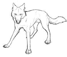 wolf sketch by Shiro-Marusu
