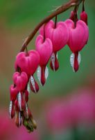 Hearts for you by skylinephoto