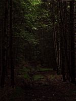 Dark forest by xXtimeless-stockXx